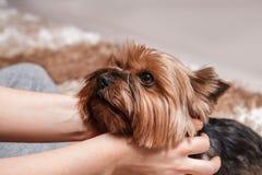 Fille avec le petit chien Photographie stock libre de droits