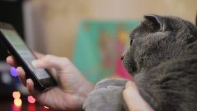 Fille avec un chat banque de vidéos