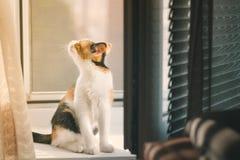 Fille avec un chien drôle Photographie stock