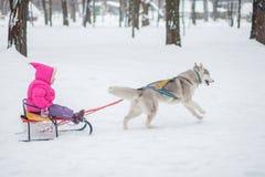 Fille avec un chien pour la promenade pendant l'hiver Photos stock