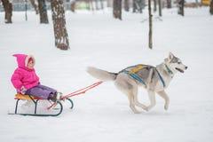 Fille avec un chien pour la promenade pendant l'hiver Image libre de droits
