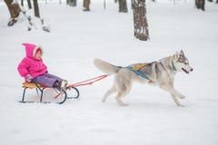Fille avec un chien pour la promenade pendant l'hiver Photo stock