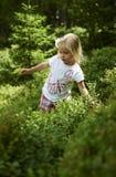 Fille blonde d'enfant petite sélectionnant les baies fraîches sur le gisement de myrtille dans la forêt Image libre de droits