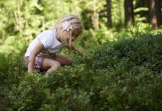 Fille blonde d'enfant petite sélectionnant les baies fraîches sur le gisement de myrtille dans la forêt Photographie stock libre de droits