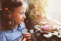 Fille d'enfant apprenant à cultiver les usines mises en pot à la maison, fleurs à la maison les explorant d'enfant avec la loupe Photo stock