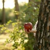 Fille d'imagination retenant une pomme rouge dans la forêt Photos libres de droits