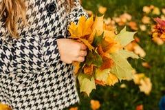 Fille dans des feuilles lumineuses intéressantes de prise de manteau dans deux mains, petit yelllow et feuille d'érable verte Her image stock