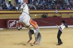 Fille dans l'exposition des chevaux classiques de dressage de l'Espagnol de race Image libre de droits