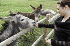 Fille dans la ferme d'âne Photos libres de droits