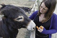 Fille dans la ferme d'âne Photographie stock