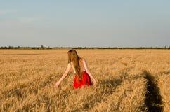 Fille dans la jupe rouge marchant sur le champ de blé, mains touchant des oreilles, vue arrière Photo libre de droits