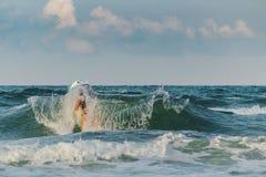 Fille dans la vague images stock