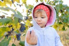 Fille dans le capot à la serre à raisin Photo stock