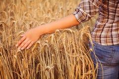 Fille dans le contact de chemise de plaid des oreilles mûres de blé Plan rapproché Image libre de droits