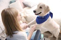 Fille dans le fauteuil roulant avec le chien de service Photographie stock