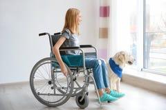 Fille dans le fauteuil roulant avec le chien de service Photos libres de droits