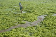 fille dans les algues Photographie stock