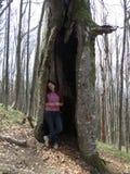 Fille dans un arbre Images stock