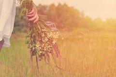 Fille dans un domaine avec un groupe de fleurs sauvages dans leurs mains Le concept de la pureté et unité avec la nature, lumière Image libre de droits