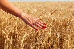 Fille dans un domaine de blé photos stock