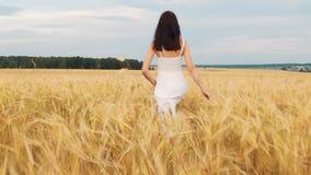 Fille de brune de beauté avec de longs cheveux sains tournant et riant extérieur sur le champ de blé d'or Apprécier la nature jeu banque de vidéos
