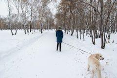 Fille de l'adolescence méconnaissable marchant son chien Photographie stock