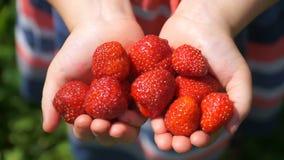 Fille de longueur jugeant une fraise juteuse disponible banque de vidéos