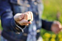 Fille de main avec un scarabée Photos stock