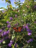 Fille de papillon Image libre de droits