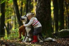Fille en parc avec le chien de traîneau de chien Fille avec le chien de traîneau sibérien Jeux délicieux de fille avec le chien d Image libre de droits
