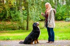 Fille en parc d'automne formant son chien dans l'obéissance