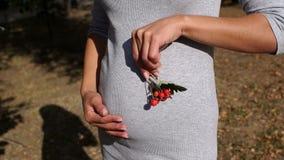 Fille enceinte frottant son ventre et tenant une branche avec les baies rouges banque de vidéos