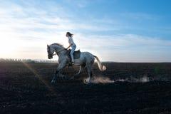 Fille et cheval au coucher du soleil, sautant par-dessus le champ photos stock