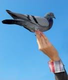 Fille et la colombe Photographie stock