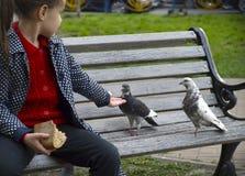 Fille et pigeons Photos libres de droits