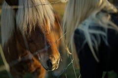 Fille et un cheval Images libres de droits