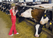 Fille et vaches Photo stock