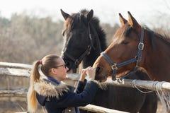 Fille frottant un cheval de pur sang dans le stylo pour le pré Photo libre de droits