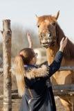 Fille frottant un cheval de pur sang dans le stylo pour le pré Image stock