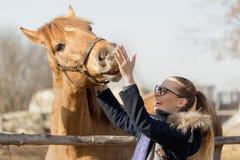 Fille frottant un cheval de pur sang dans le stylo pour le pré Images stock