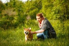 Fille frottant un chien Shiba Inu Photo libre de droits