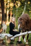Fille heureuse avec son cheval et chien de border collie images libres de droits