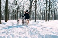 Fille jouant avec des chiens dans la neige Images stock