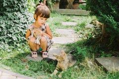 Fille jouant avec le chat de chatons Photos stock