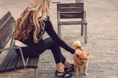 Fille marchant avec un chien dans la ville Pomerani espiègle et animé Photo stock