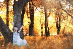 Fille marchant en parc d'automne Automne dans la ville, fille avec d Image libre de droits