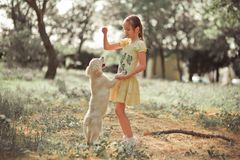 Fille mignonne de jeune adolescent de belle scène de chiot de chien d'arrêt appréciant posant des vacances d'heure d'été avec le  Photos libres de droits