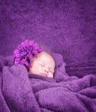 Fille nouveau-née élégante Image stock