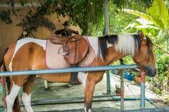 Fille parlant avec de la sa cannelle de cheval Images stock