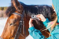 Fille peignant la crinière noire de cheval avec un peigne photo libre de droits